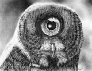 Evolution Great Gray Owl by Lisandro Pena