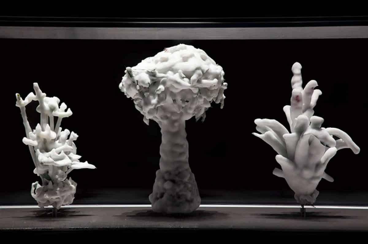 Tropisme by Julian Charrière