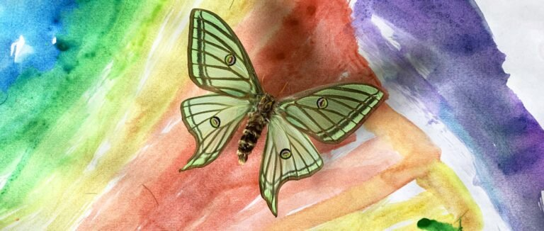 From the Heart by Andrew Markey - Insect art
